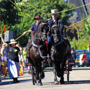 (127) Ringsteken paarden (Foto: Henno Koudijs)