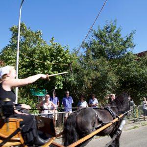 (132) Ringsteken paarden (Foto: Berry Jakobsen)