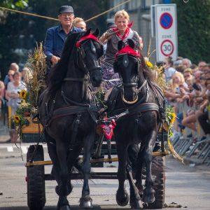 (162) Ringsteken paarden (Foto: Maaike van den Brink)