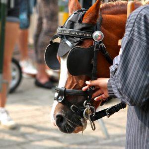(167) Ringsteken paarden (Foto: Suzanne Veltink)
