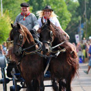 (172) Ringsteken paarden (Foto: Suzanne Veltink)