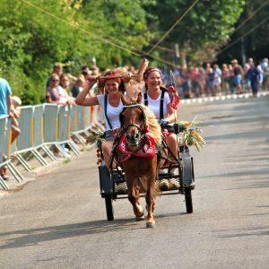 (173) Ringsteken paarden (Foto: Suzanne Veltink)